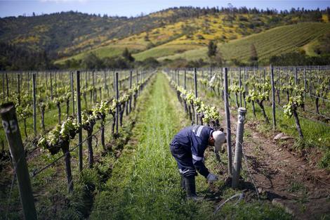 SABOR VINARA U REKOVCU: Srbija uvozi vina, a domaće sorte zapostavlja!