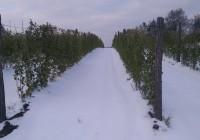 Mraz obrao voće u Levču
