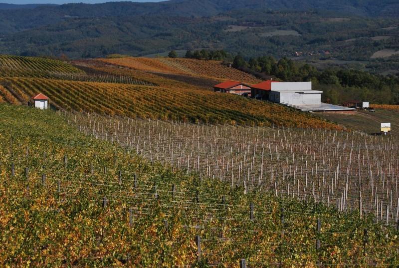 Levačko vinogorje - Copy