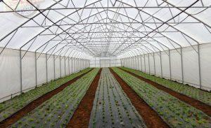 Plastenička proizvodnja zdrave hrane